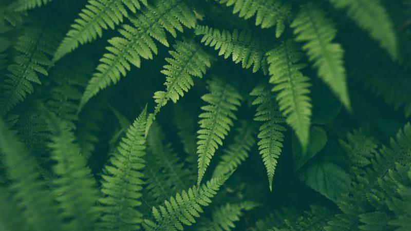 ingrown-ferns