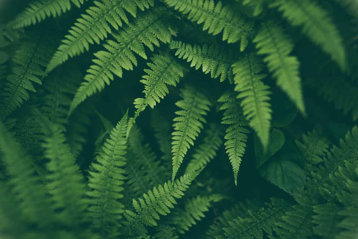 Follow These Amazing Tips to Grow Ferns Indoors